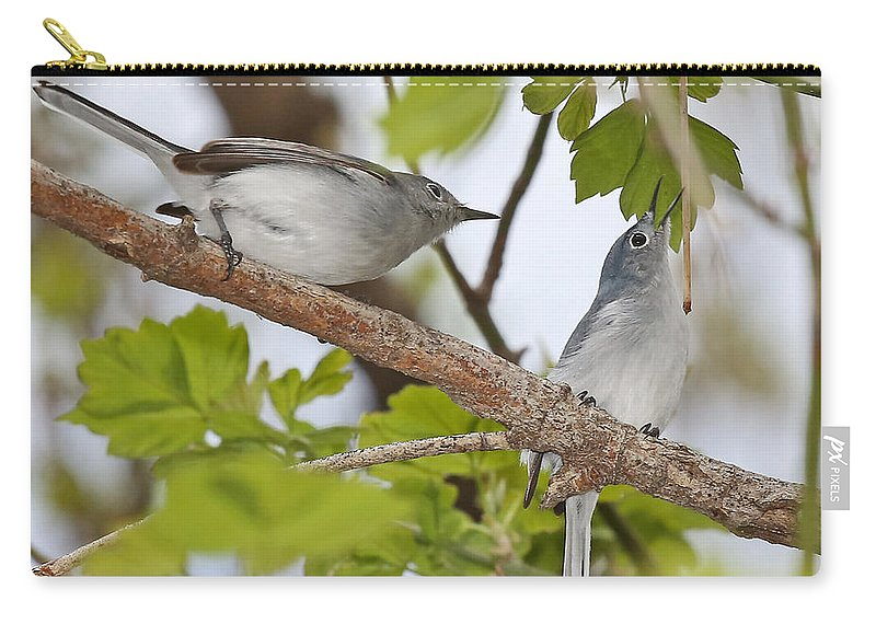 Birds Carry-all Pouch featuring the photograph Blue-gray Gnatcatcher by Mike Dickie