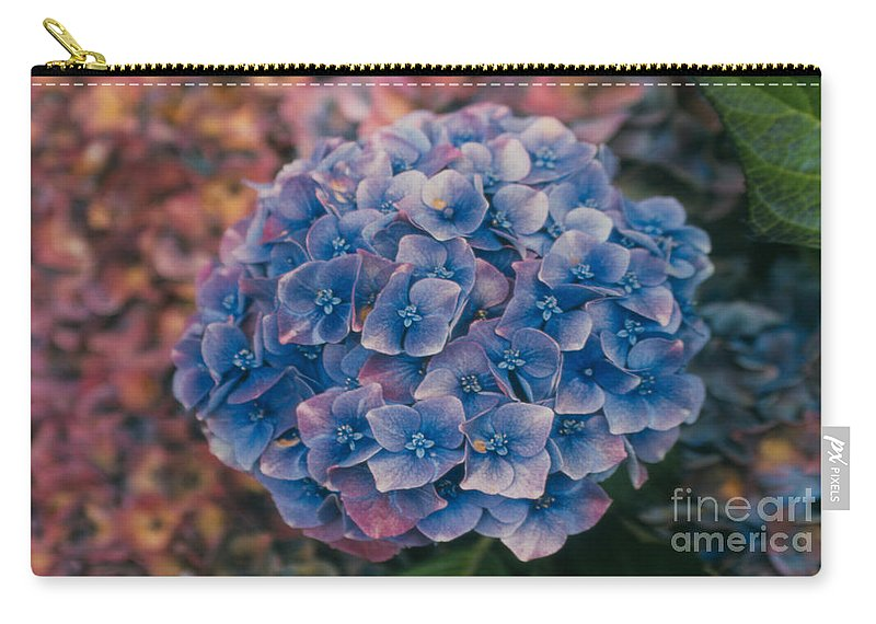 Hydrangea Carry-all Pouch featuring the photograph Blue Hydrangea by Heather Kirk