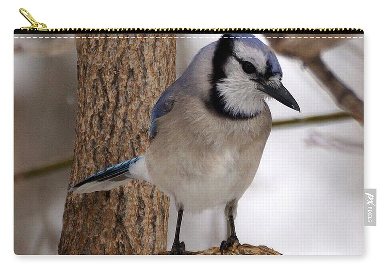 Blue Jay Carry-all Pouch featuring the photograph Blue Jay by Lori Tordsen
