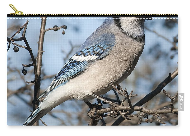 Festblues Carry-all Pouch featuring the photograph Blue Jay.. by Nina Stavlund