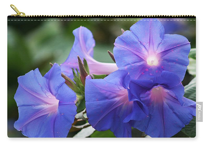 Convolvulaceae Carry-all Pouch featuring the photograph Blue Morning Glory Wildflowers - Convolvulaceae by Kathy Clark