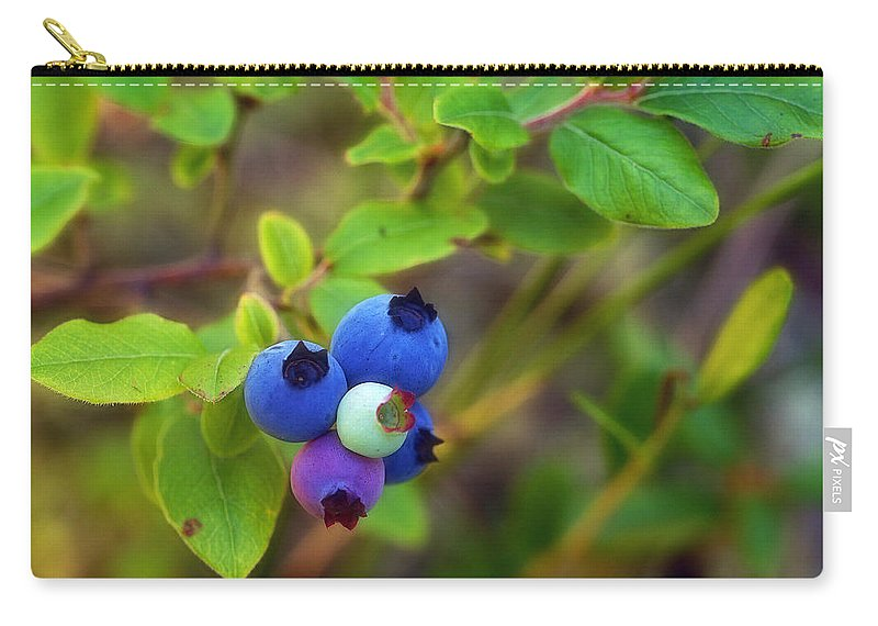 Blueberries Carry-all Pouch featuring the photograph Blueberries by Bill Morgenstern