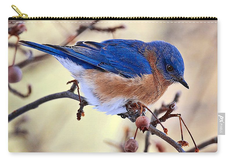 Birds Carry-all Pouch featuring the photograph Bluebird by Marcia Colelli