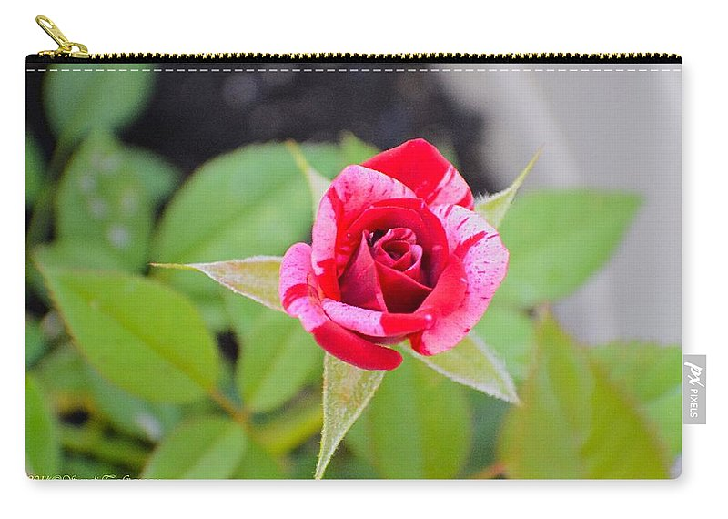Rose Carry-all Pouch featuring the photograph Blushing Rose by Sonali Gangane