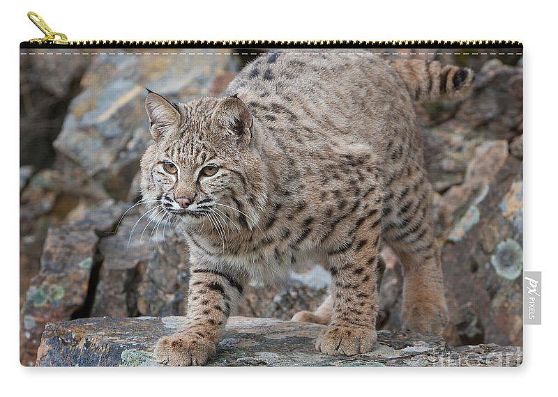 Bobcat Carry-all Pouch featuring the photograph Bobcat On Rock by Jerry Fornarotto