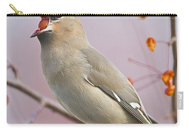 Bohemian Waxwing Carry-all Pouch featuring the photograph Bohemian Waxwing by John Vose