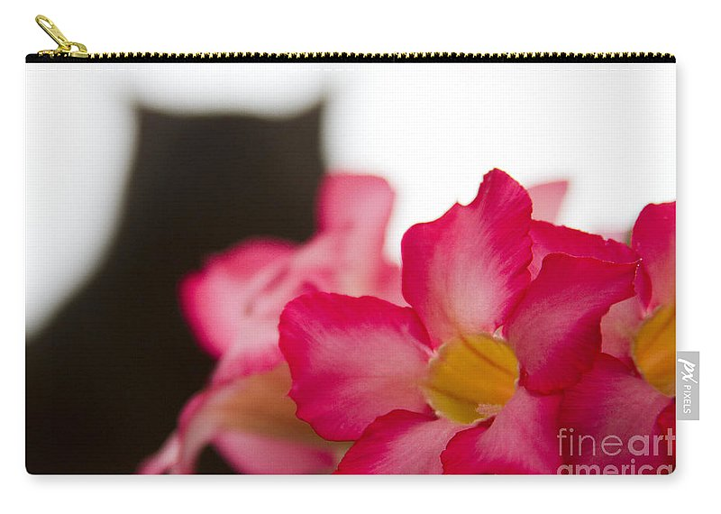 Aloha Carry-all Pouch featuring the photograph Boki Bear by Sharon Mau