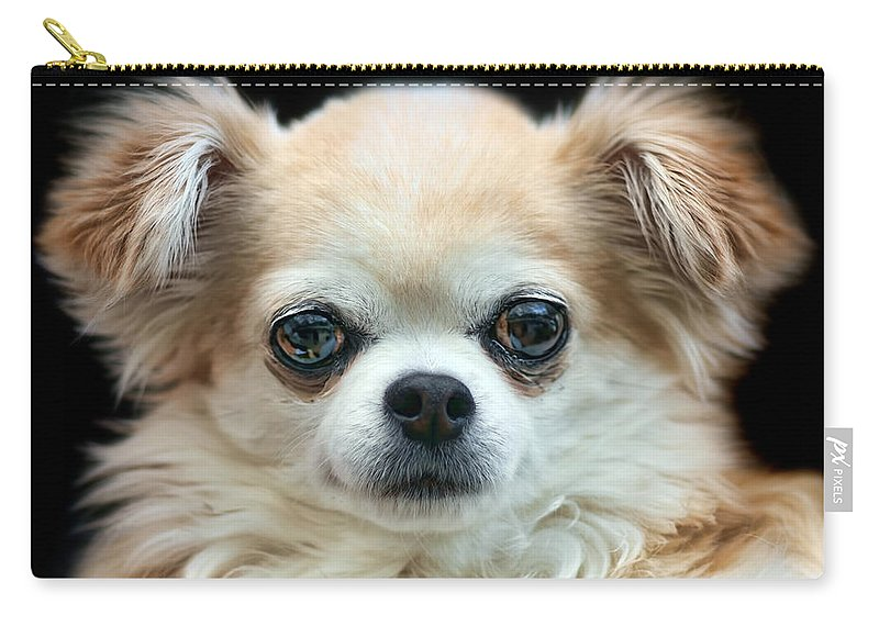 Dog Carry-all Pouch featuring the photograph Bonnie by Nikolyn McDonald