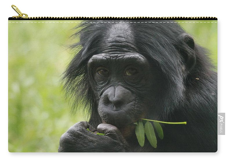 Bonobo Eating Carry-all Pouch featuring the photograph Bonobo Eating by Dan Sproul