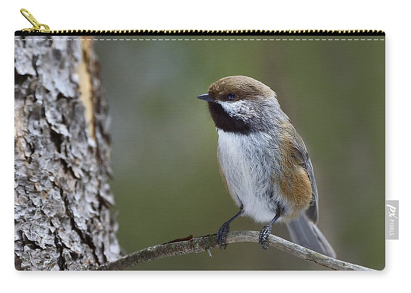 Boreal Chickadee Carry-all Pouch featuring the photograph Boreal Chickadee by Tony Beck