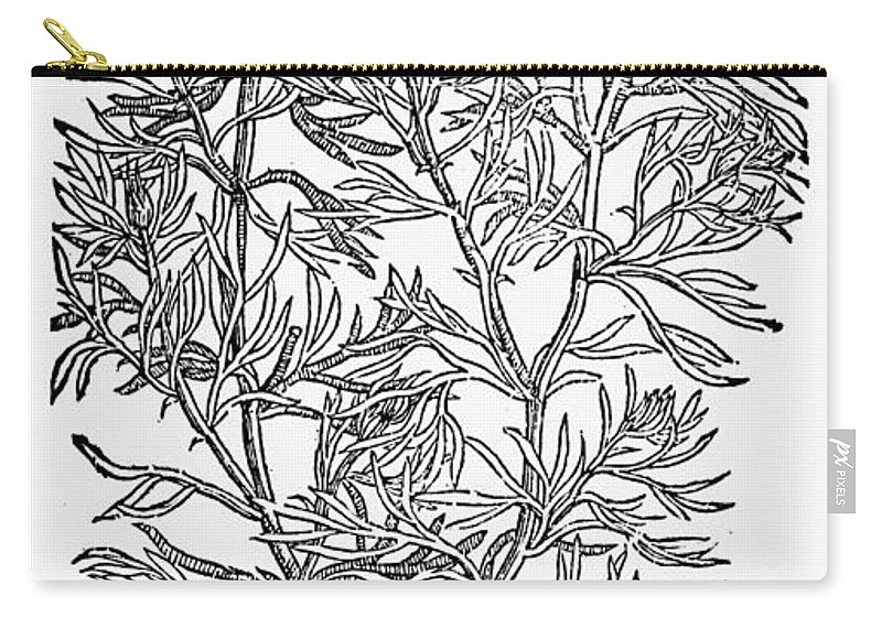 1597 Carry-all Pouch featuring the photograph Botany: African Rue, 1597 by Granger