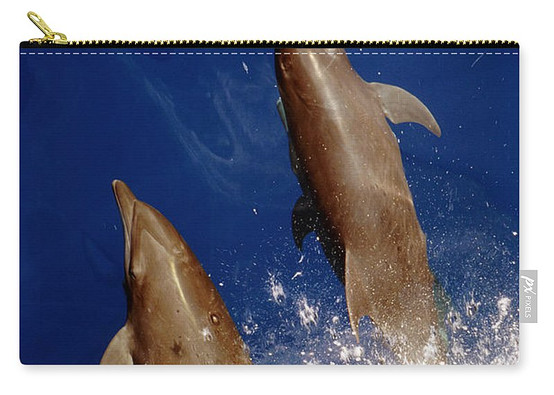 No People; Vertical; Outdoors; Day; Overhead View; Two Animals; Nature; Wildlife; Sunlight; Idyllic; Sea; Wave; Water; Bottlenose Dolphin; Tursiops Truncatus; Sealife Carry-all Pouch featuring the photograph Bottlenose Dolphins Tursiops Truncatus by Anonymous