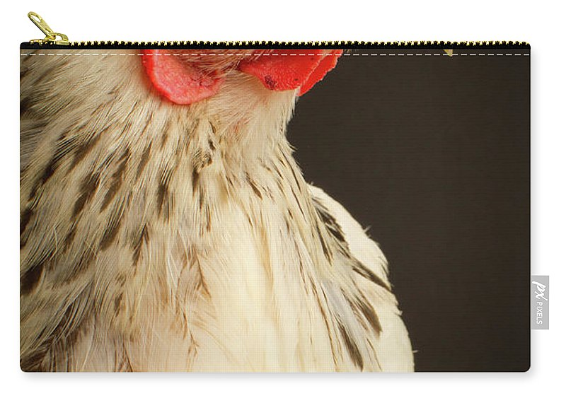 Hen Carry-all Pouch featuring the photograph Brahma Hen Portrait by © Cynthia Classen