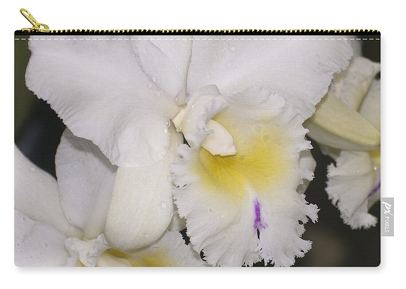 White Orchid Carry-all Pouch featuring the photograph Brassocattleya Berangere Neige by Terri Winkler