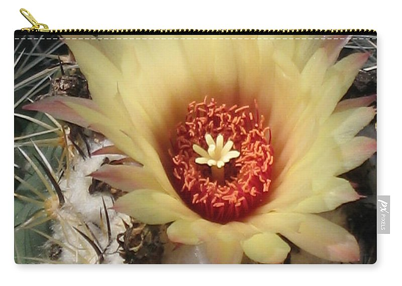Cactus Carry-all Pouch featuring the photograph Bright And Beauty by Christiane Schulze Art And Photography