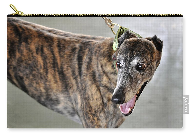 Horizontal Carry-all Pouch featuring the photograph Brindle Greyhound Dog Usa by Sally Rockefeller