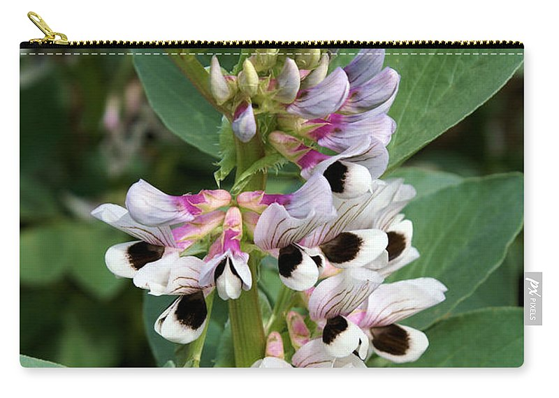 Plant Carry-all Pouch featuring the photograph Broad Beans by Ron Harpham