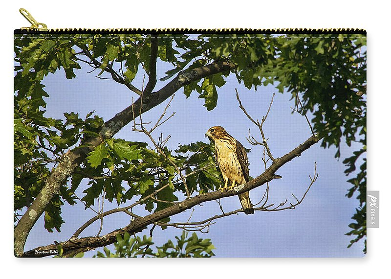 Bird Carry-all Pouch featuring the photograph Broad Winged Hawk by Christina Rollo