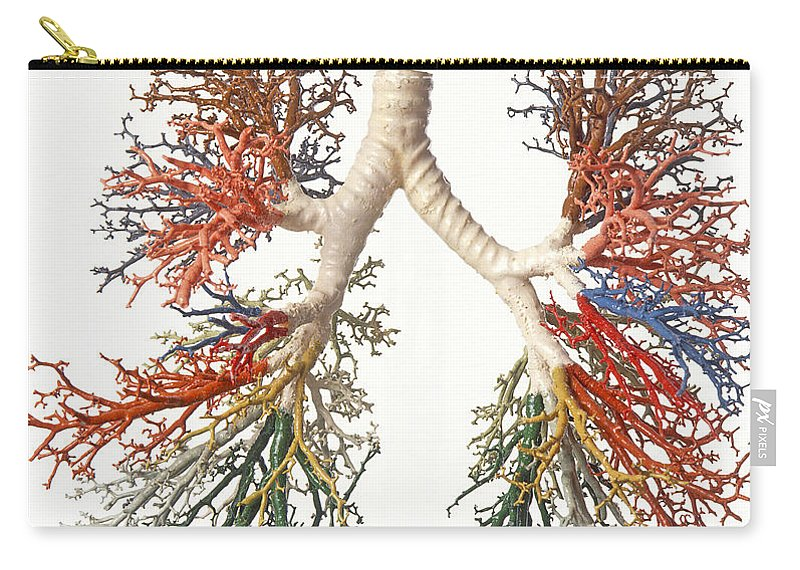 Bronchial Tree Model Carry All Pouch For Sale By Dave King