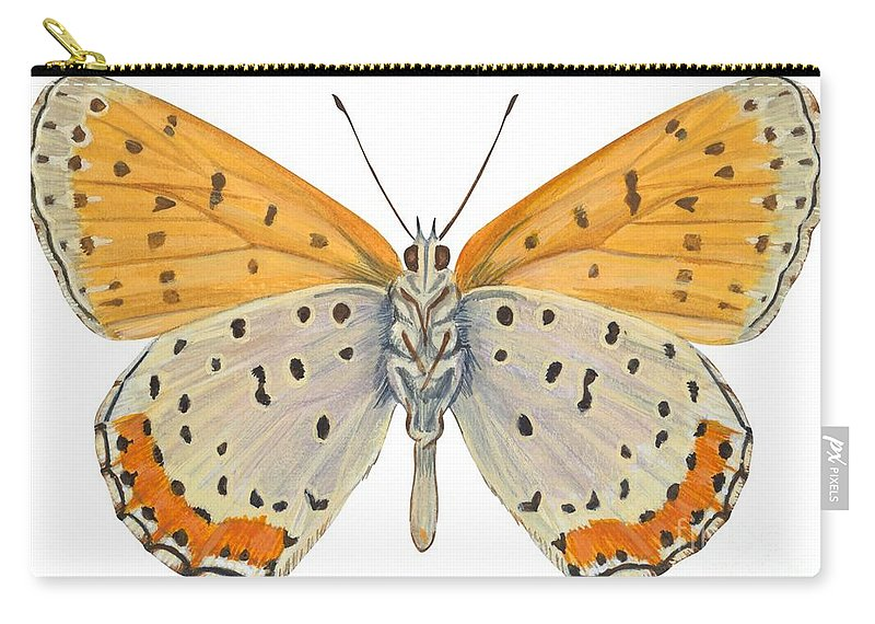 Zoology; No People; Horizontal; Close-up; Full Length; White Background; One Animal; Animal Themes; Nature; Wildlife; Symmetry; Fragility; Wing; Animal Pattern; Antenna; Entomology; Illustration And Painting; Spotted; Yellow; Bronze Carry-all Pouch featuring the drawing Bronze Copper Butterfly by Anonymous