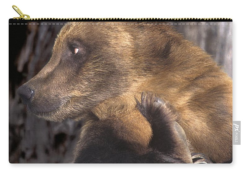 Brown Bear Carry-all Pouch featuring the photograph Brown Bear Tackles An Itchy Foot Endangered Species Wildlife Rescue by Dave Welling
