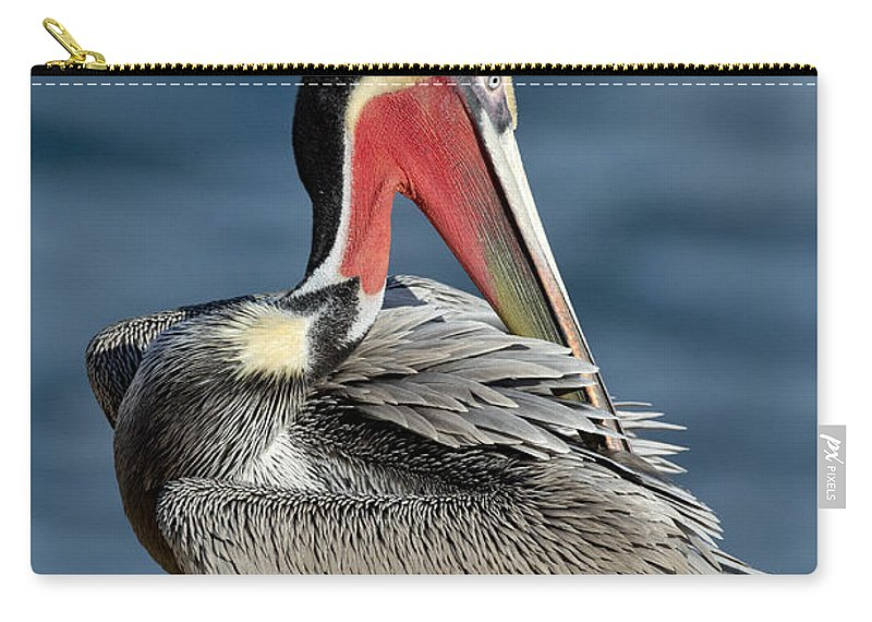 Brown Pelican Carry-all Pouch featuring the photograph Brown Pelican Preening by Anthony Mercieca