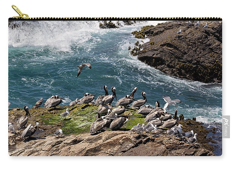 Brown Pelican Carry-all Pouch featuring the photograph Brown Pelicans And Gulls On The Reef by Kathleen Bishop