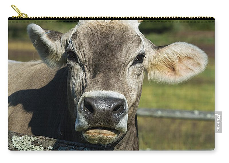 Brown Swiss Carry-all Pouch featuring the photograph Brown Swiss Cow by John Greim