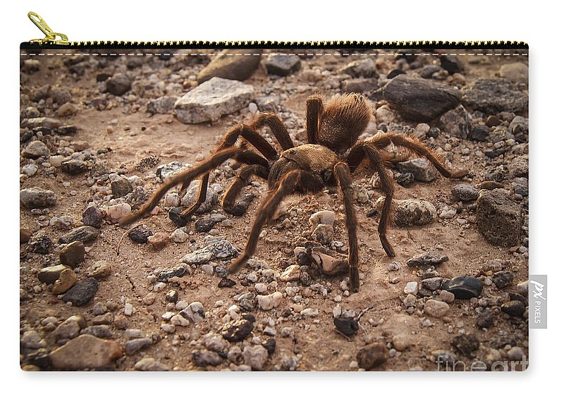 Aphonopelma Hentzi Carry-all Pouch featuring the photograph Brown Tarantula by Robert Bales