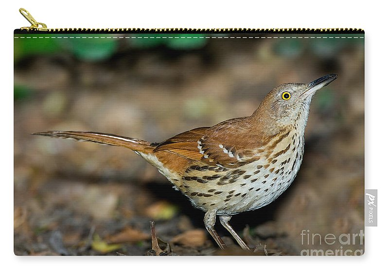 Brown Thrasher Carry-all Pouch featuring the photograph Brown Thrasher by Anthony Mercieca