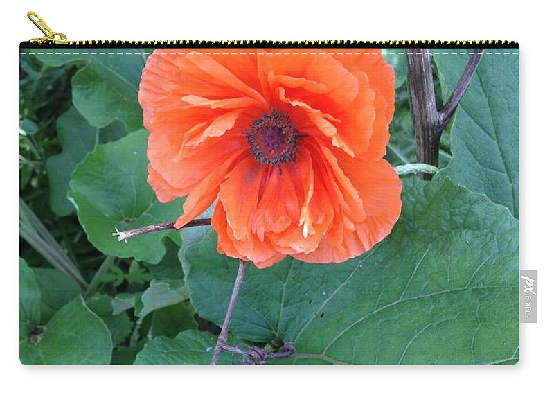 Orange Flower Carry-all Pouch featuring the photograph Bryan's Poppy by Joseph Yarbrough