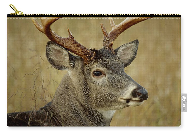 Deer Carry-all Pouch featuring the photograph Buck by Eric Albright