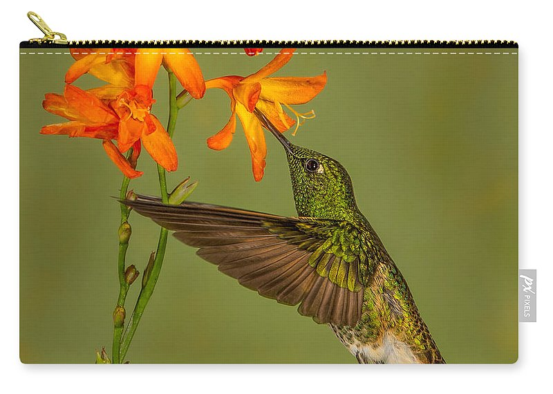 Ecuador Carry-all Pouch featuring the photograph Buff-tailed Coronet Hummingbird No 1 by Jerry Fornarotto