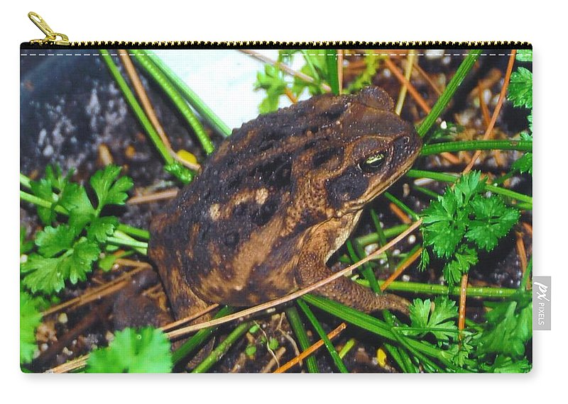 Hiding In The Parsley Carry-all Pouch featuring the photograph Bufo Toad by Robert Floyd