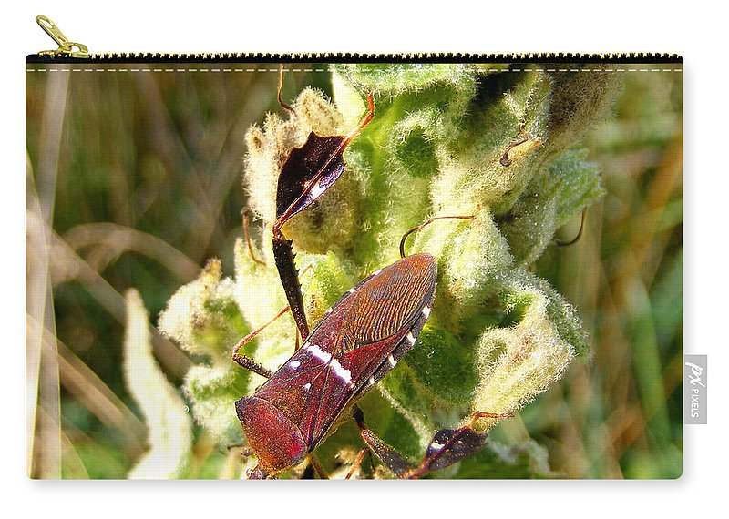 Duane Mccullough Carry-all Pouch featuring the photograph Bug On Stalk Of The Wooly Mullein by Duane McCullough