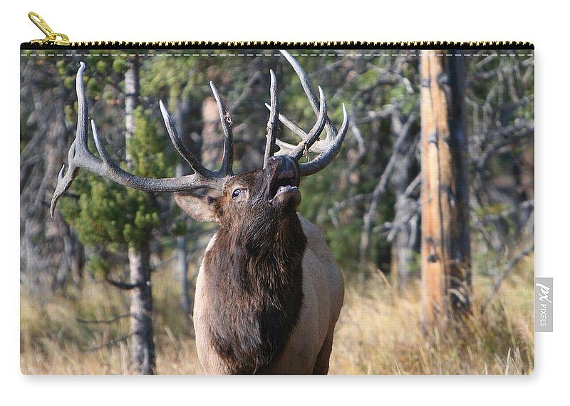 Antler Carry-all Pouch featuring the photograph Bugle by David Andersen