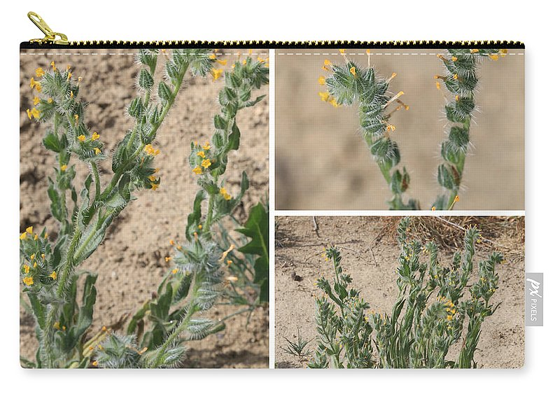 Carry-all Pouch featuring the photograph Bugloss Fiddleneck Collage by Carol Groenen