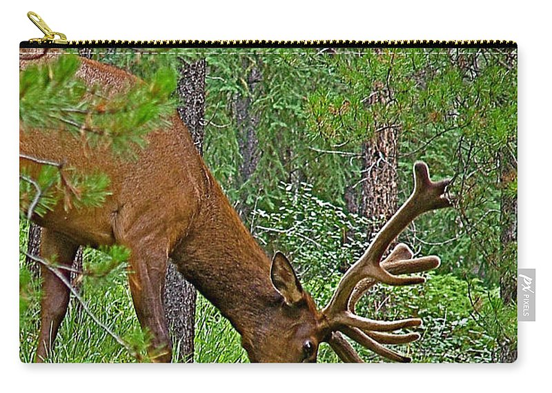 Bull Elk Near Maligne Canyon In Jasper Np Carry-all Pouch featuring the photograph Bull Elk Near Maligne Canyon In Jasper Np-alberta by Ruth Hager
