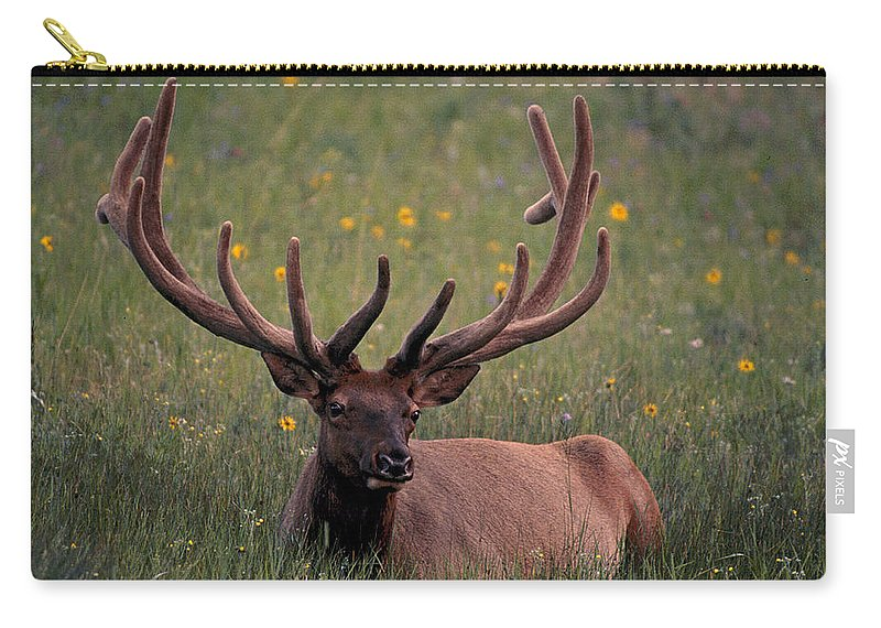 Elk Carry-all Pouch featuring the photograph Bull Elk Resting by Eric Albright