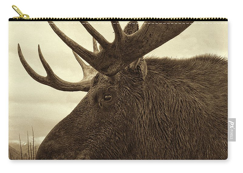 Wildlife Photographs Carry-all Pouch featuring the photograph Bull Moose In Sepia by Phyllis Taylor
