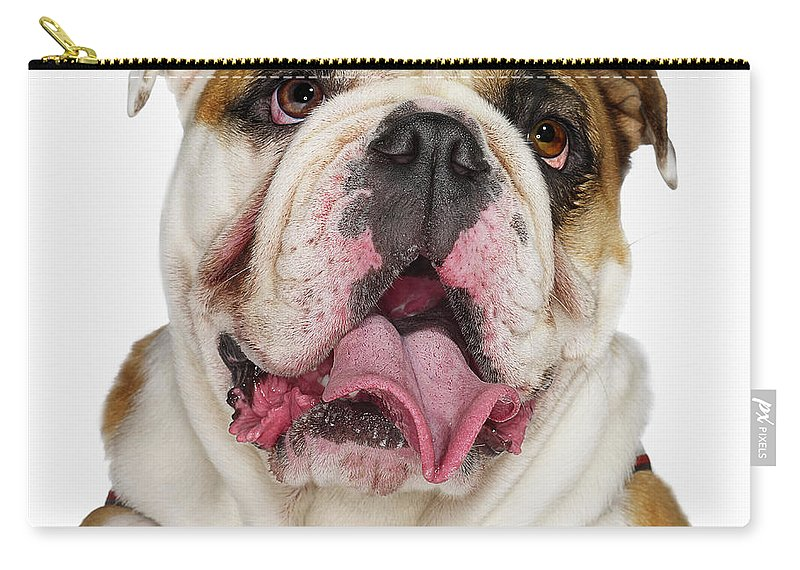 Pets Carry-all Pouch featuring the photograph Bulldog by Gandee Vasan