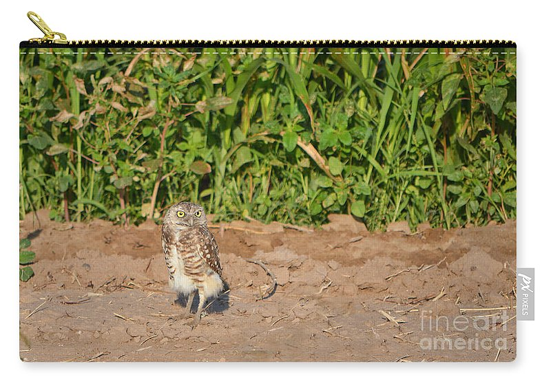Owl Carry-all Pouch featuring the photograph Burrowing Owl IIi by Donna Greene