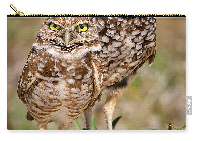 Carry-all Pouch featuring the photograph Burrowing Owls by Dennis Goodman