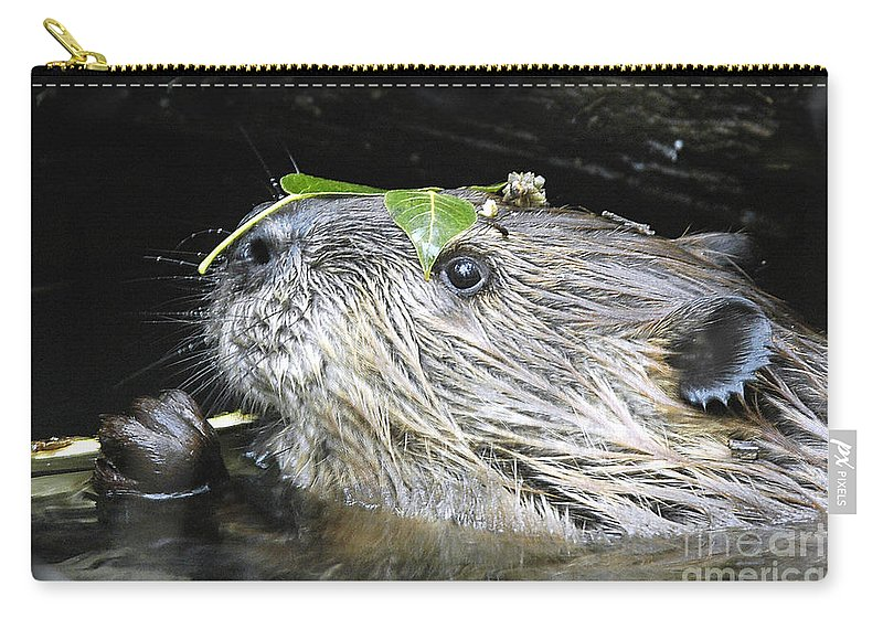 Beaver Carry-all Pouch featuring the photograph Busy Beaver by Gary Beeler