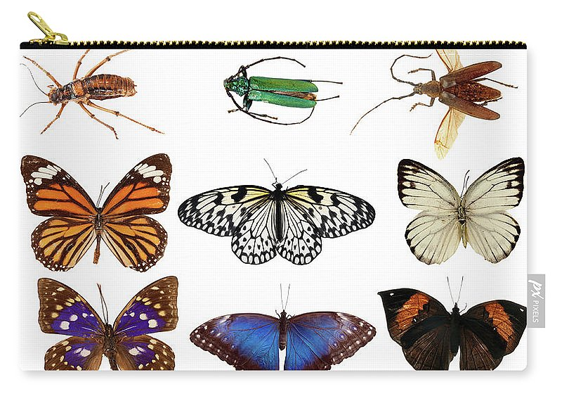 Common Blue Butterfly Carry-all Pouch featuring the photograph Butterflies And Beetles by Mashabuba