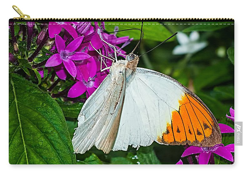 White Carry-all Pouch featuring the photograph Butterfly 63 by Photos By Cassandra