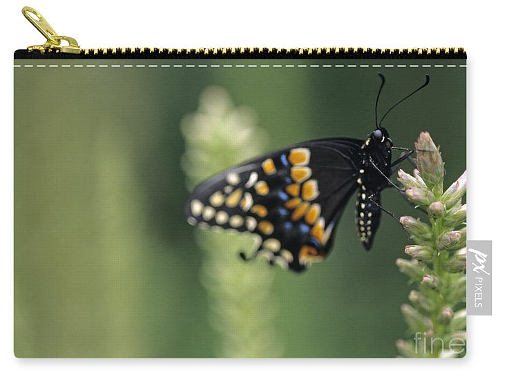 Travel Carry-all Pouch featuring the photograph Butterfly E. Black Swallowtail by Jim Corwin