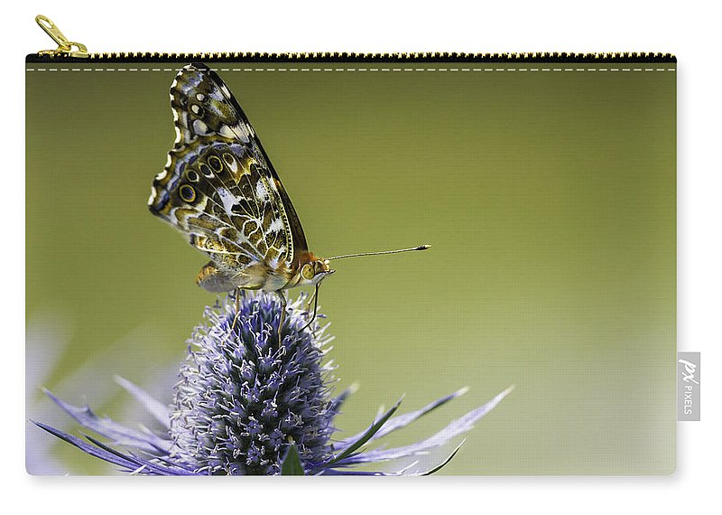 Butterfly On Purple Thistle Carry-all Pouch featuring the photograph Butterfly On Thistle by Peter v Quenter