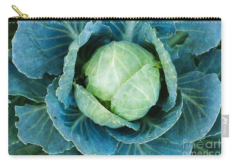 Cabbage Carry-all Pouch featuring the photograph Cabbage Painterly by Andee Design