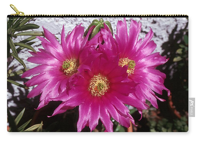 Cactus Carry-all Pouch featuring the photograph Cactus 2 by Andy Shomock